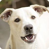 Adopt A Pet :: Barnum - Burbank, CA