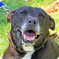 Adopt A Pet :: Shorty - Jupiter, FL