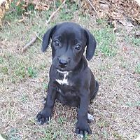 Adopt A Pet :: SIRI - MILWAUKEE, WI