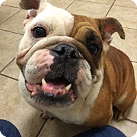 Adopt A Pet :: Autumn - Park Ridge, IL