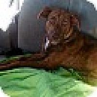 Adopt A Pet :: LACEY - CHAMPAIGN, IL