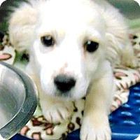 Adopt A Pet :: Ziggy - Boulder, CO
