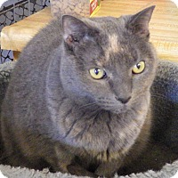 Adopt A Pet :: Pixie (declawed) - Quail Valley, CA