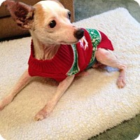 Adopt A Pet :: Sugar Senior Alert - Wilmington, DE