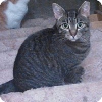 Adopt A Pet :: Trudy - E. Claridon, OH