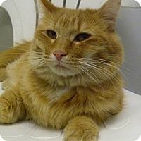 Adopt A Pet :: Bourbon - Hamburg, NY