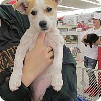 Adopt A Pet :: Mae - Rocky Mount, NC