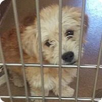 Adopt A Pet :: Franklin - Las Vegas, NV
