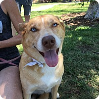 Adopt A Pet :: Zoey - Los Angeles, CA