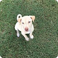 Adopt A Pet :: Cleo - Powder Springs, GA