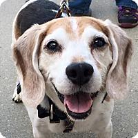 Adopt A Pet :: Ricky - Palatine, IL