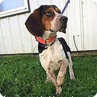 Adopt A Pet :: Morris - Newport, KY