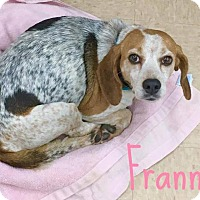 Adopt A Pet :: Frannie - Smithtown, NY