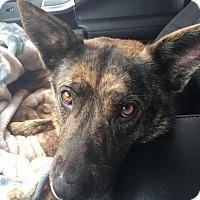 Adopt A Pet :: Tamsen - Greeneville, TN