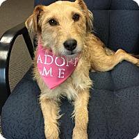 Adopt A Pet :: Trudie - san diego, CA