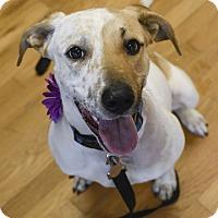 Adopt A Pet :: Mara - Knoxville, TN