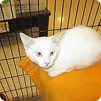 Adopt A Pet :: Bugsy - Jeffersonville, IN