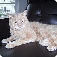 Adopt A Pet :: Buddy - Reston, VA