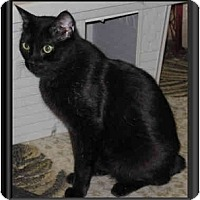 Adopt A Pet :: Bobby - Catasauqua, PA