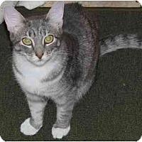 Adopt A Pet :: Susie (MMc) - Little Falls, NJ