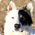 Adopt A Pet :: MACK