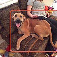 Adopt A Pet :: BRUCE - Boca Raton, FL