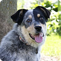 Adopt A Pet :: Bindi - Delano, MN
