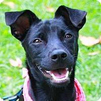 Adopt A Pet :: Adda - San Francisco, CA