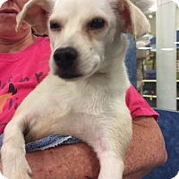 Adopt A Pet :: Sugar - Fresno, CA