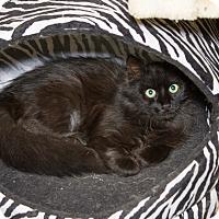 Adopt A Pet :: Furball - Chicago, IL