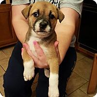 Adopt A Pet :: Tizzy - Byhalia, MS