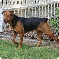 Adopt A Pet :: Bryan - Cary, NC