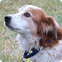 Adopt A Pet :: Willow - Lebanon, CT