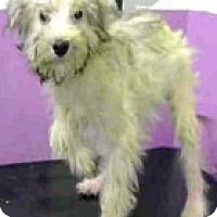 Adopt A Pet :: Flora-Adoption Pending - Boulder, CO