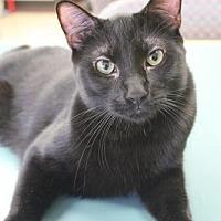 Adopt A Pet :: Moosh - Los Angeles, CA
