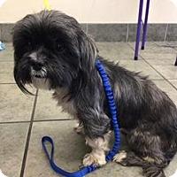 Adopt A Pet :: A383591 - San Antonio, TX