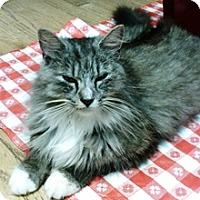 Adopt A Pet :: Faye - Lebanon, PA