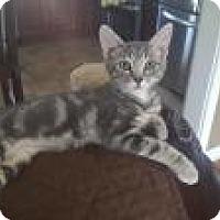 Adopt A Pet :: Crush - Berkeley Hts, NJ