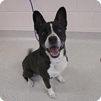 Adopt A Pet :: Raymie - Reno, NV