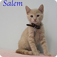 Adopt A Pet :: Salem - Bradenton, FL