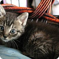 Adopt A Pet :: Cooper - Sherman Oaks, CA