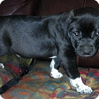 Adopt A Pet :: Zack - Albany, NY