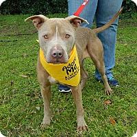 Adopt A Pet :: Ari - McCormick, SC