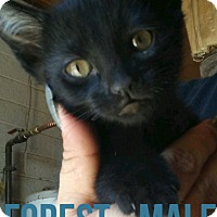 Adopt A Pet :: FOREST - Glendale, AZ