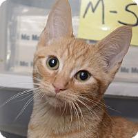 Adopt A Pet :: Aldo - New York, NY