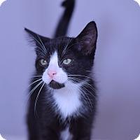 Adopt A Pet :: Sebastian - Virginia Beach, VA