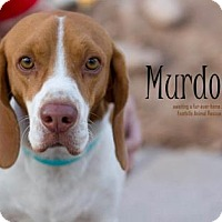 Adopt A Pet :: Murdock - Scottsdale, AZ