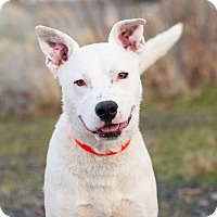 Adopt A Pet :: Clyde - Washoe Valley, NV