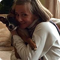 Adopt A Pet :: NICK - HAGGERSTOWN, MD