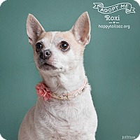 Adopt A Pet :: Roxie - Chandler, AZ